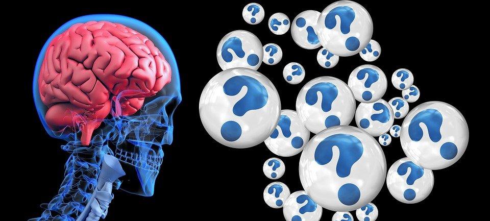 Neurotransmetteurs: exploration des éléments de base du comportement