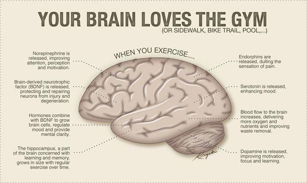 L'exercice aérobie améliore vos fonctions cérébrales et votre mémoire