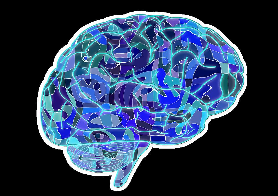 Les neuro protecteurs naturels en action