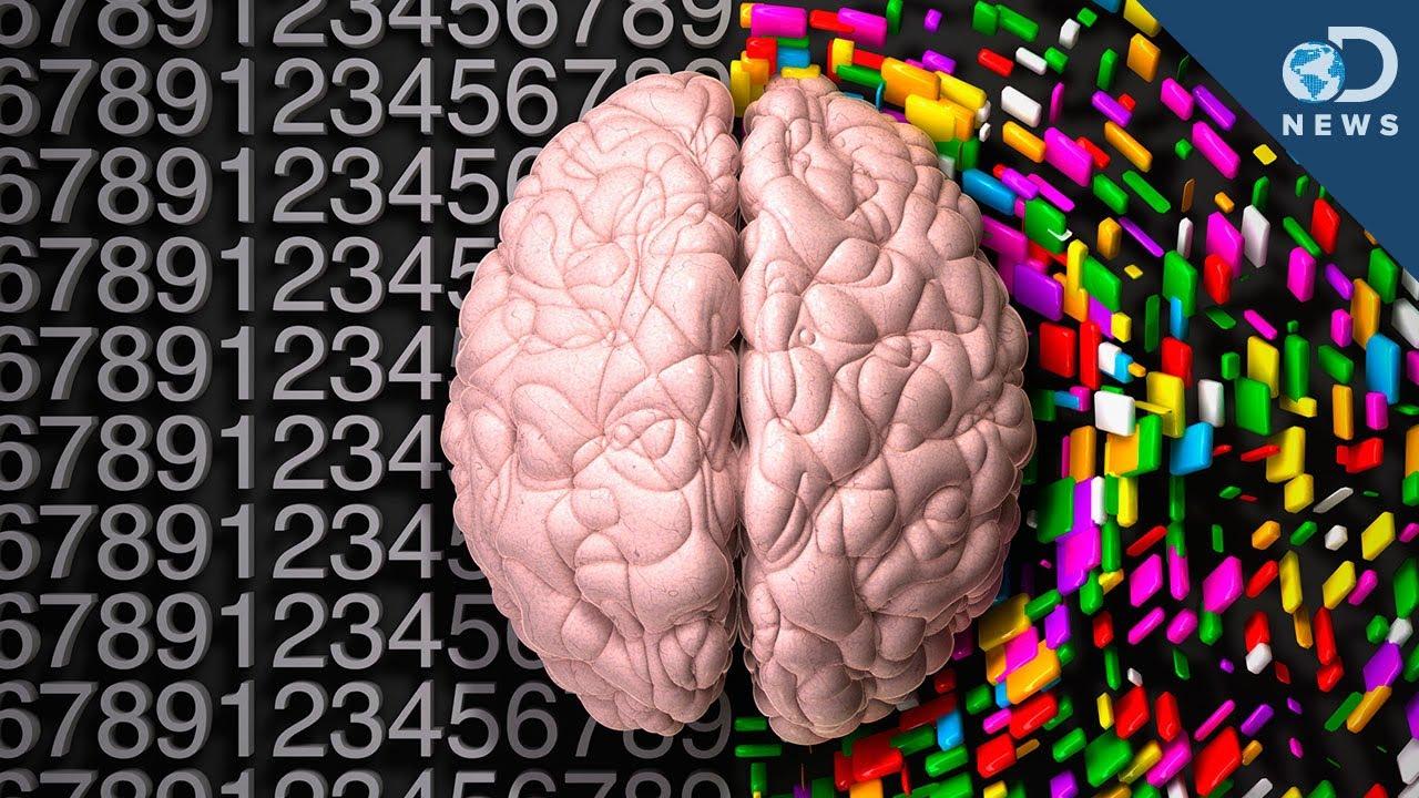 Left Brain vs Right Brain - Difference and Comparison   Diffen