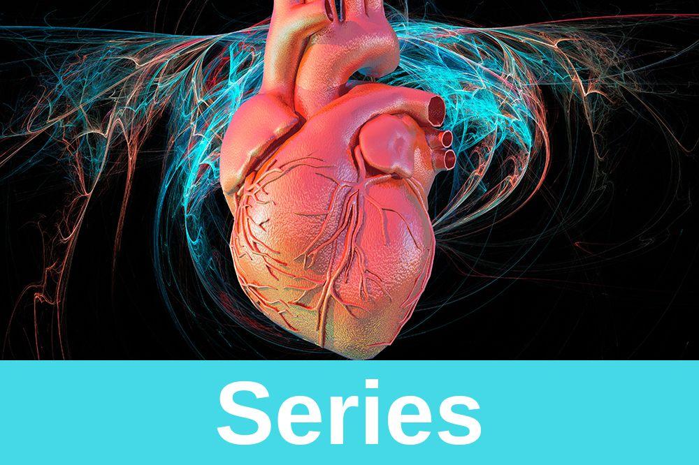 Système cardiovasculaire : cœur et vaisseaux sanguins (artères et veines)